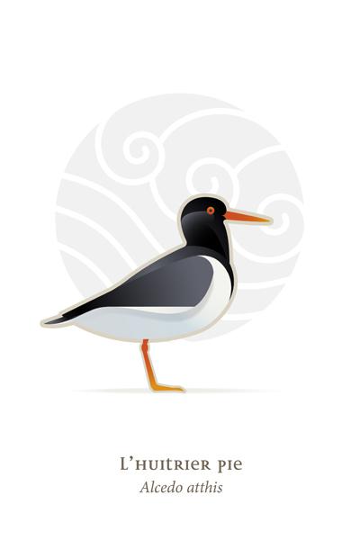 oiseaux_compil_8_oiseaux-02