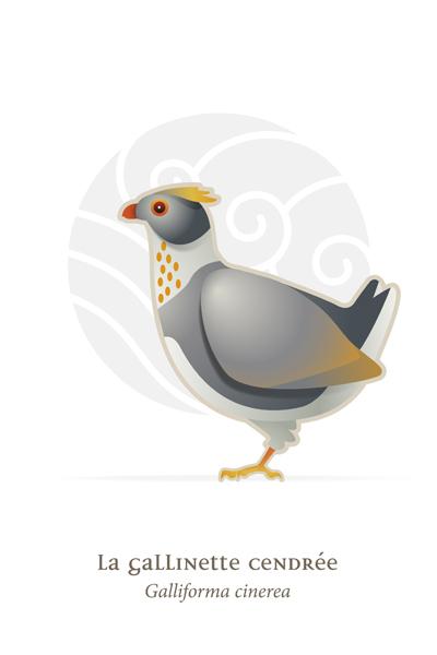 oiseaux_compil_8_oiseaux-03
