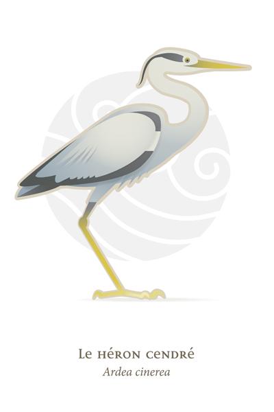 oiseaux_compil_8_oiseaux-04