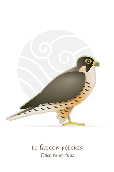 oiseaux_compil_8_oiseaux-05