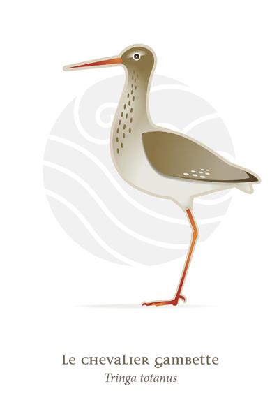 oiseaux_compil_8_oiseaux-06