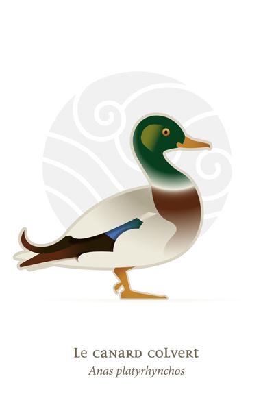 oiseaux_compil_8_oiseaux-07