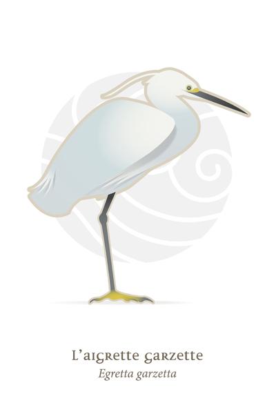 oiseaux_compil_8_oiseaux-08